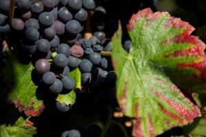 Dans le village viticole de Bligny les Beaune